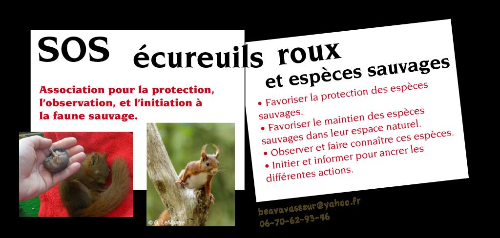SOS écureuils roux : pavé présentation