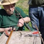 Le Jardin déborde ! Démonstration de greffe de fruitier par un Croqueur de pommes